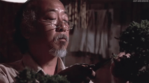 Mr. Miyagi cutting a bonsai tree